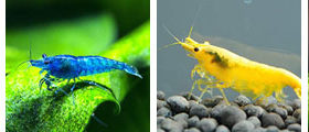 invertebrate, wholesale and exporter tropical fish